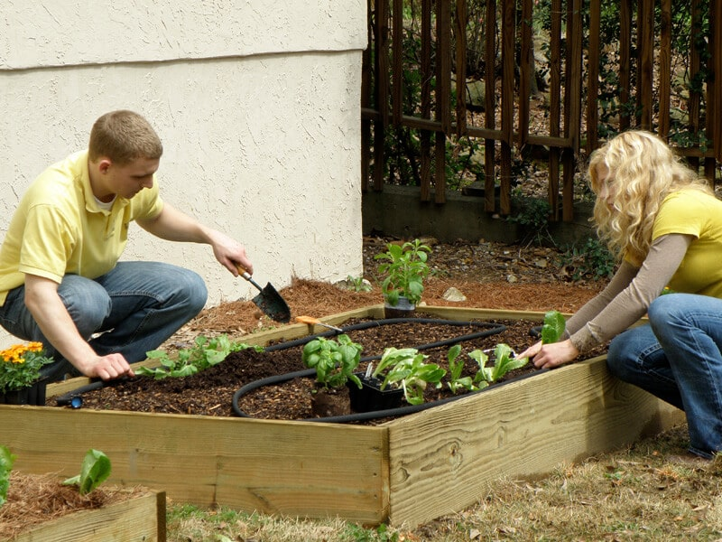 Understanding Container Vegetable Gardening